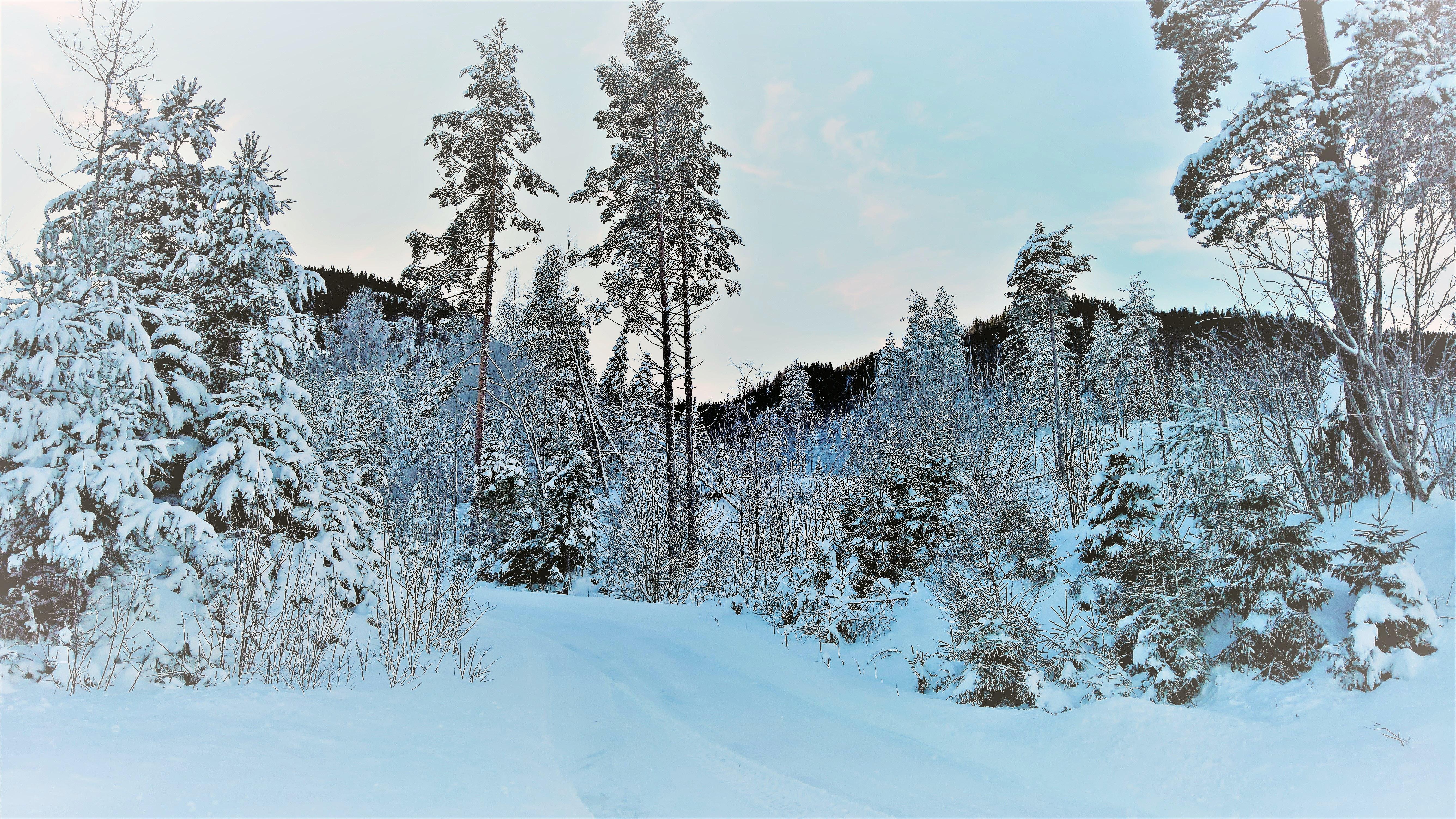 Kostenloses Foto Zum Thema Norwegen Schnee Wald