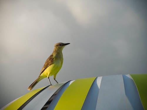 Základová fotografie zdarma na téma oblačno, pruhy, sedící, žlutá