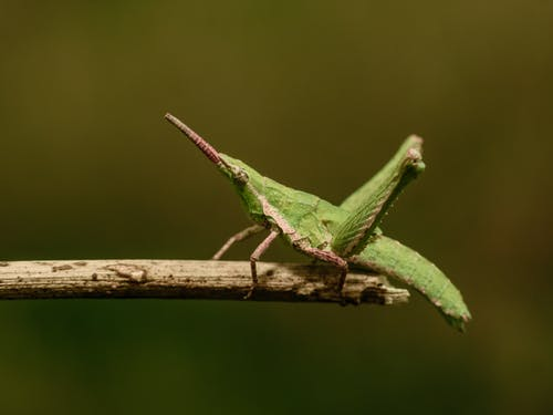 Free stock photo of bugs, color, green, insect