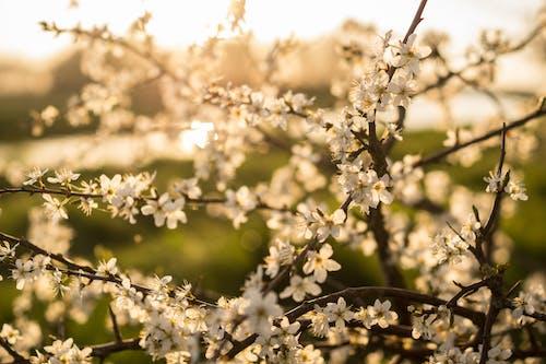 Foto d'estoc gratuïta de assolellat, estiu, flora, floral