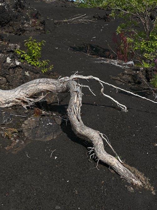 Photos gratuites de à feuilles caduques, aboiement, ancien