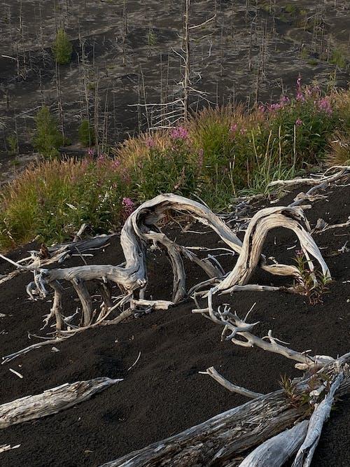 Gratis stockfoto met berg, bladeren, bloeien
