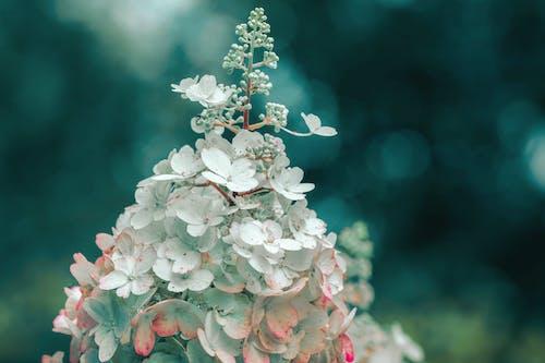 Darmowe zdjęcie z galerii z dekoracja, drzewo, flora