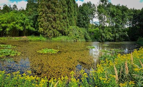 Free stock photo of arboretum, arboretum hungary, background