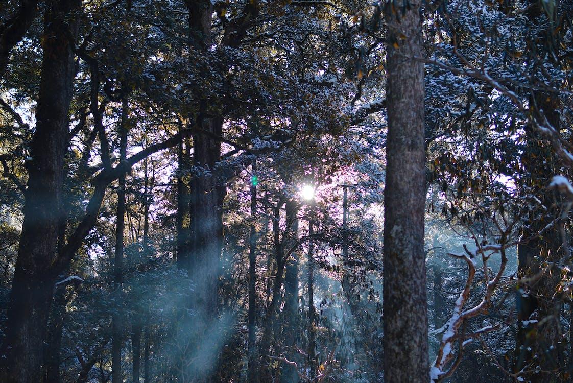 dagslys, grene, landskab