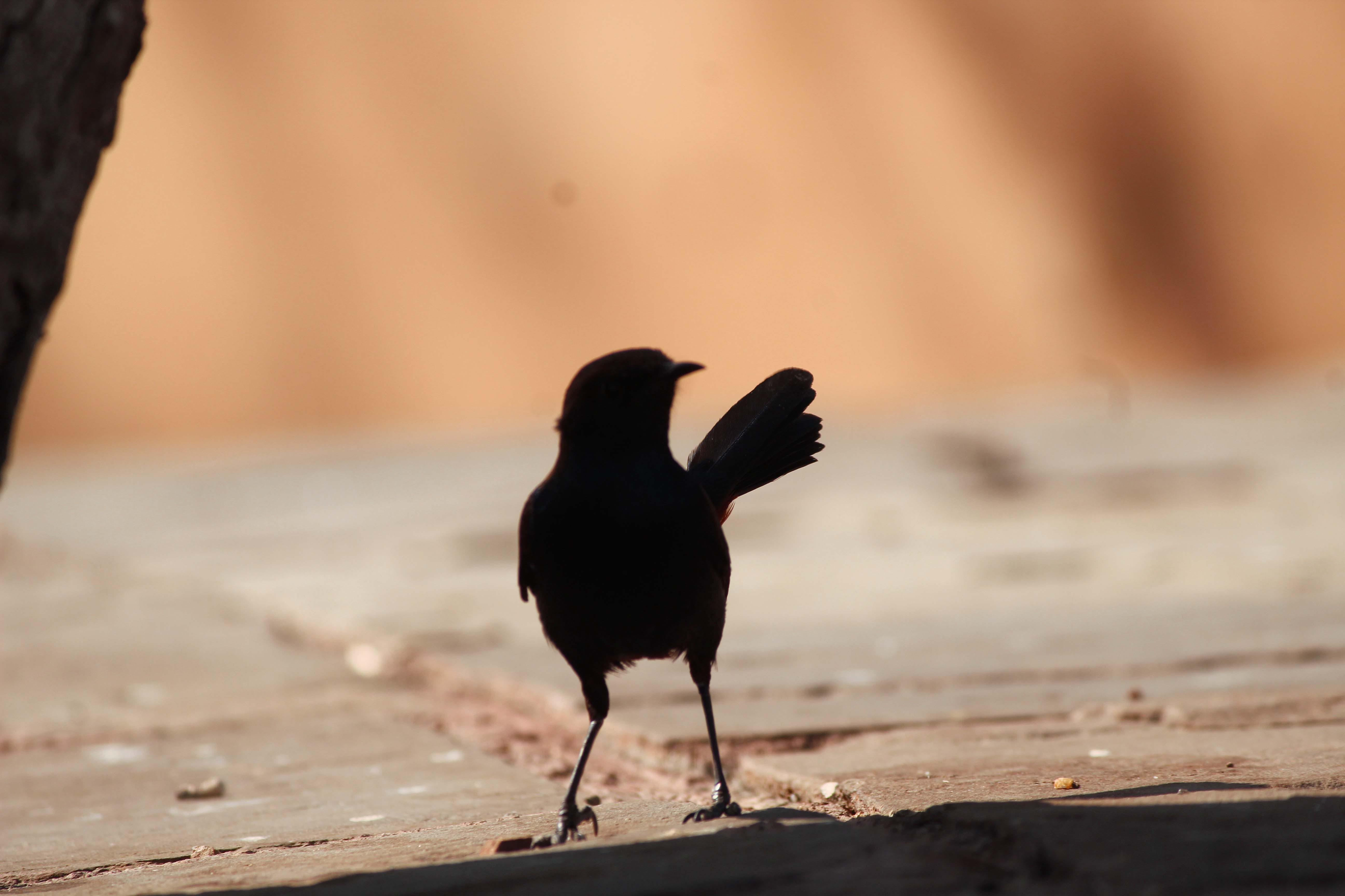Free stock photo of bird, birds