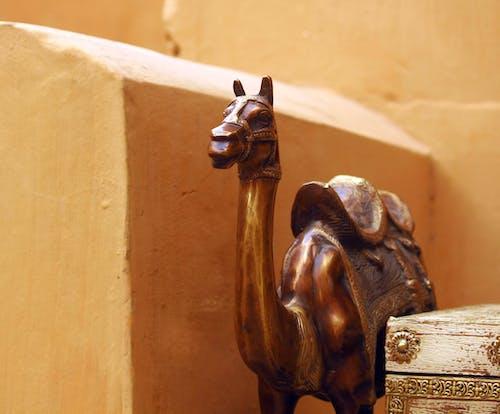 Безкоштовне стокове фото на тему «верблюд, верблюди, пустеля»