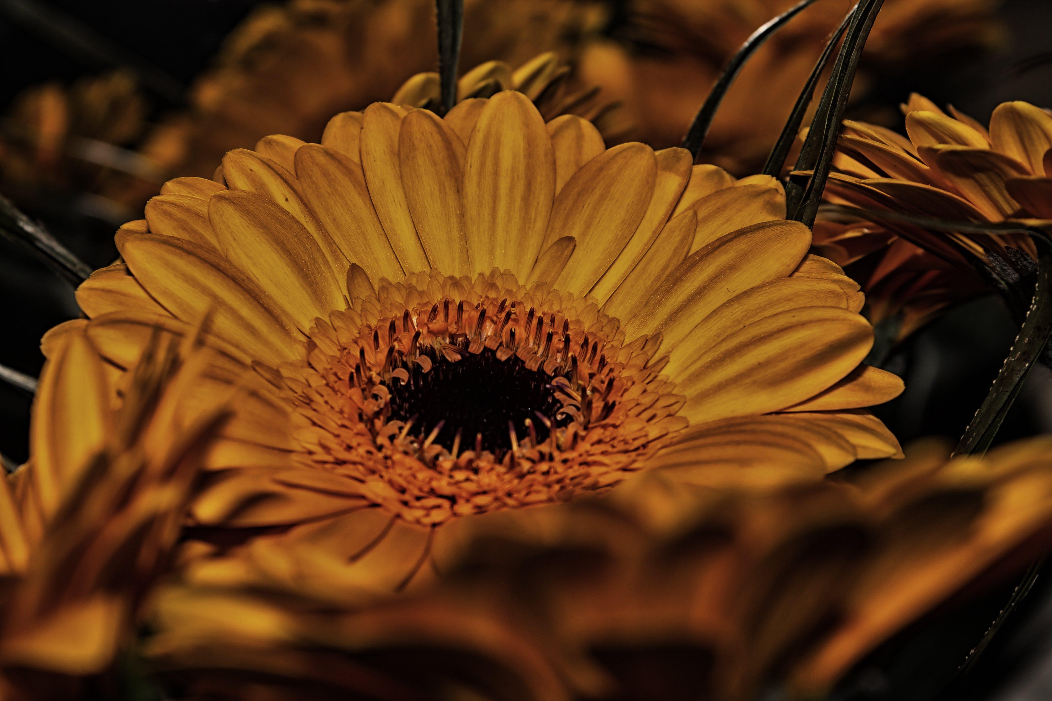 Free stock photo of flower, yellow, yellow flowers