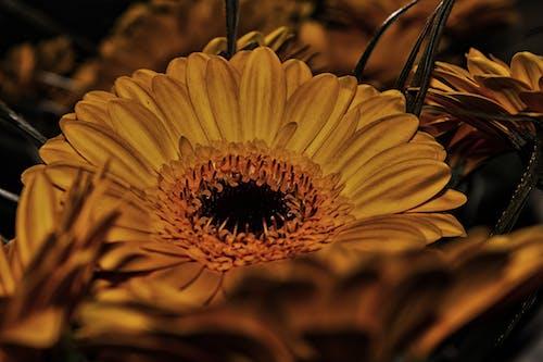 Ilmainen kuvapankkikuva tunnisteilla keltainen, keltaiset kukat, kukka