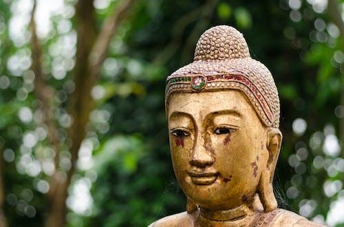 Photos gratuites de arbres, art, bouddha, Bouddhisme