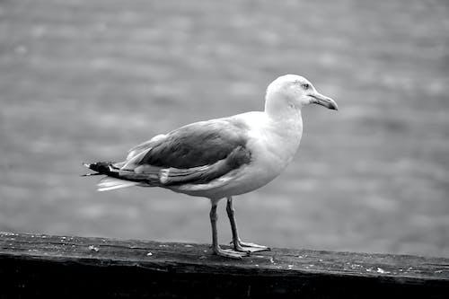 Photos gratuites de animalier, aviaire, faune, goã © land