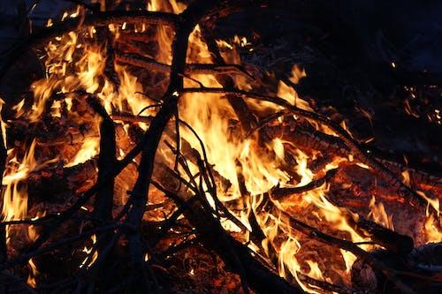 Kostnadsfri bild av brand