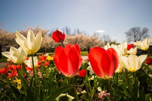 Kostnadsfri bild av blå, blommor, färger, färgrik