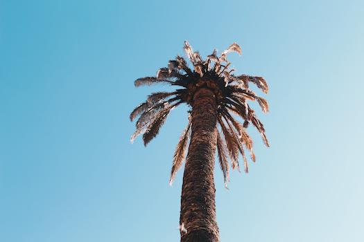 Low Angle Photography of Sago Palm