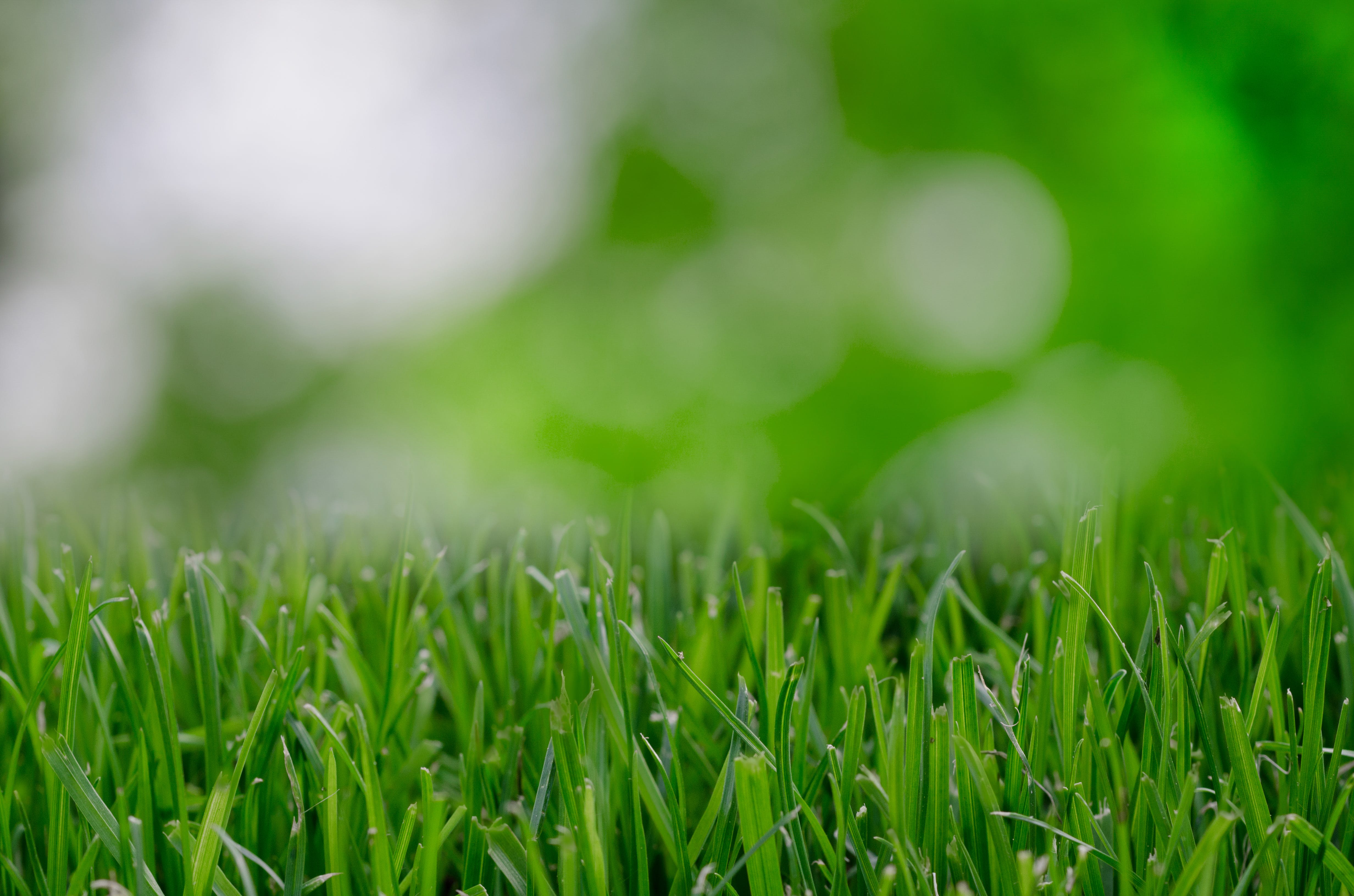 Selective Focus Photography of Green Grass