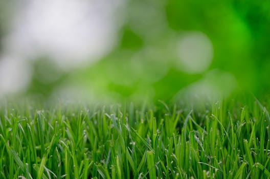 Free stock photo of garden, grass, lawn, whitespace