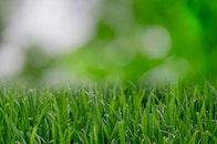 garden, grass, lawn