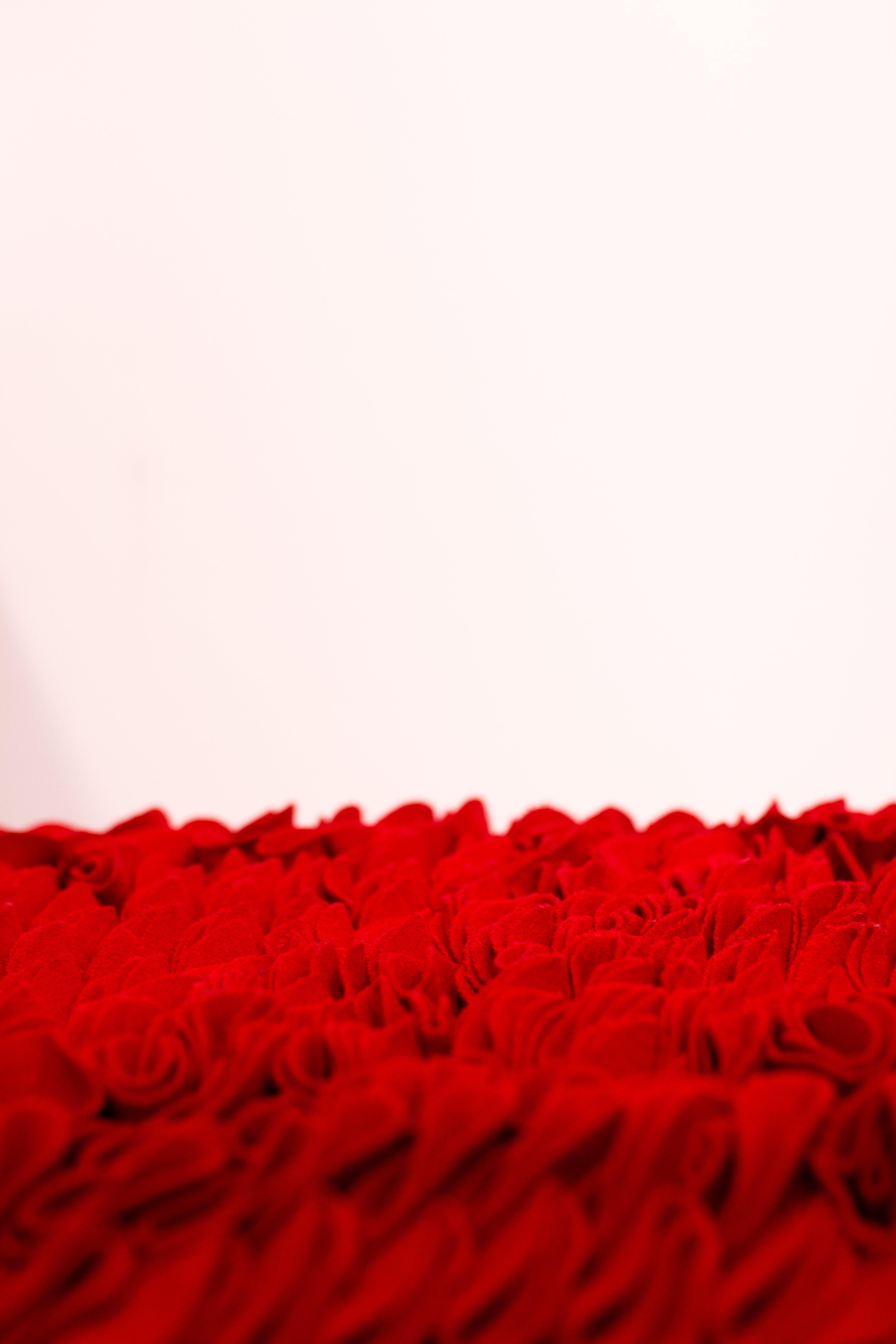 Fotobanka sbezplatnými fotkami na tému biele pozadie, červená, detailný záber, dizajn