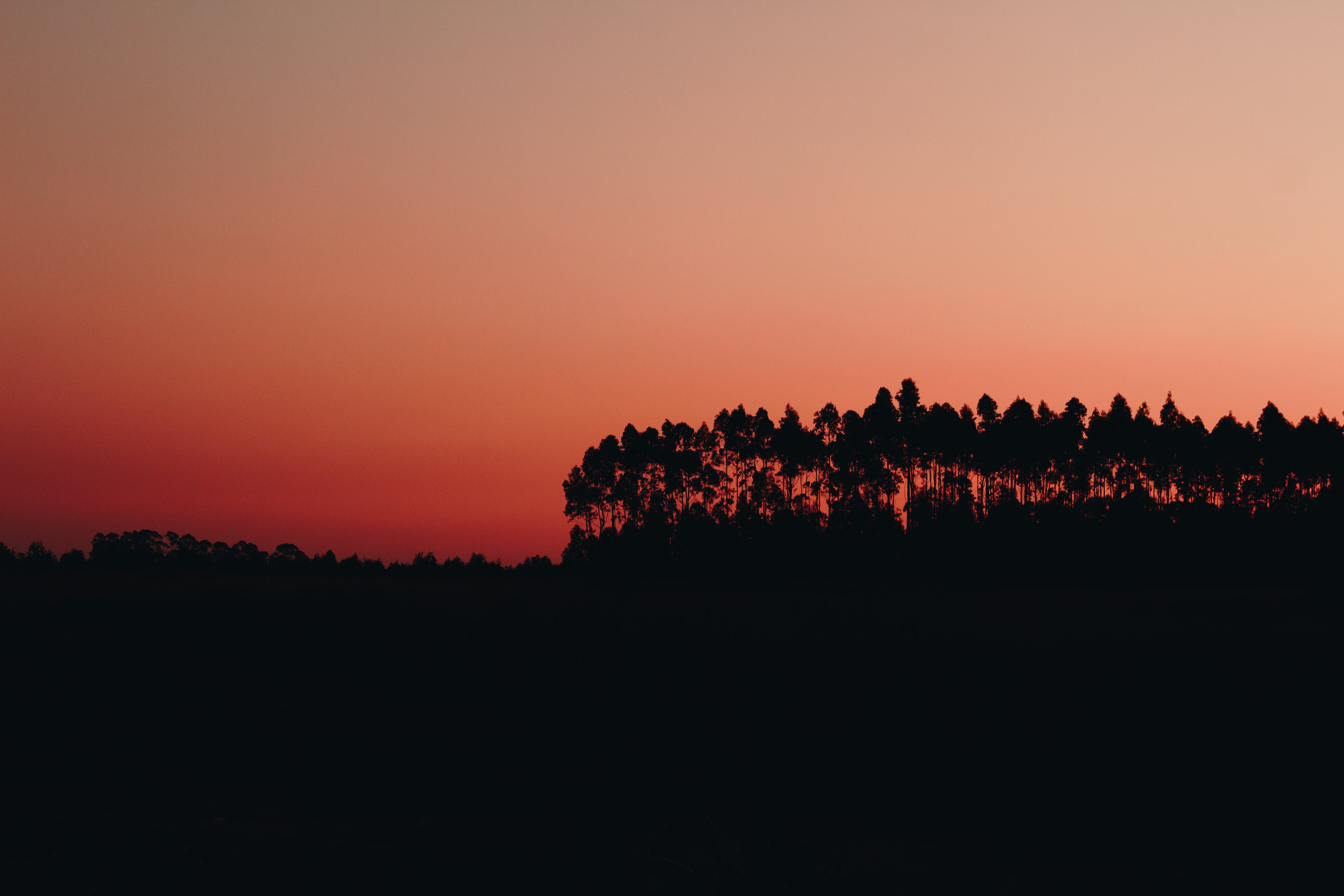 Silhouette of Trees during Dawn