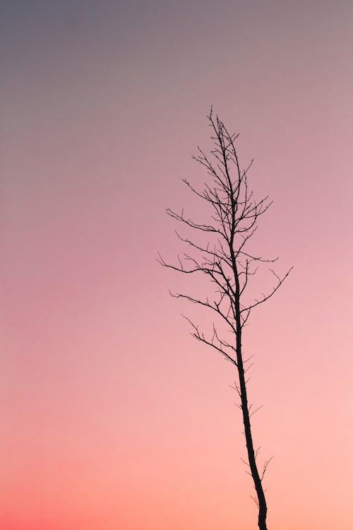 arbore, cer, contrast