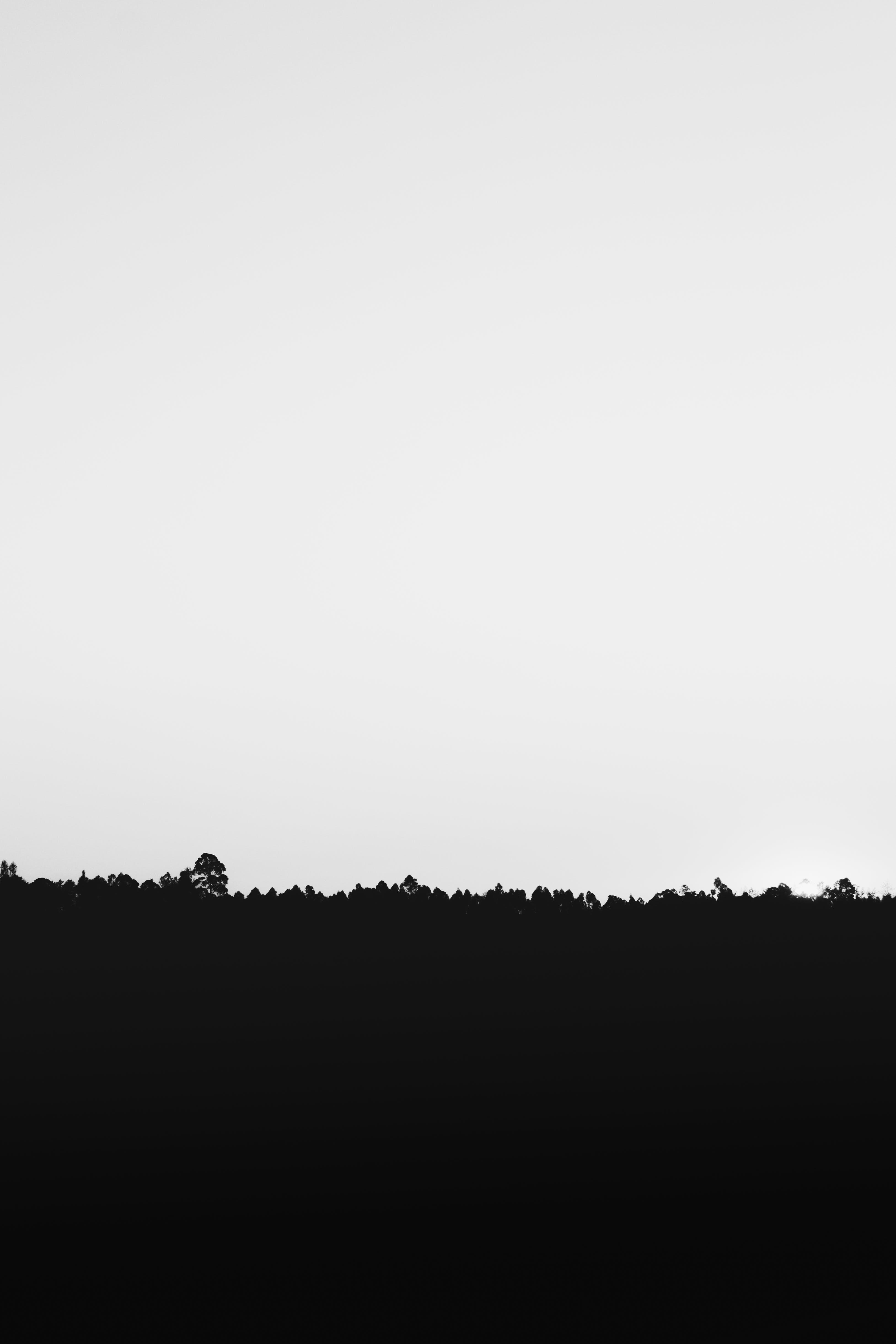 Silhouette of Grass Under White Sky