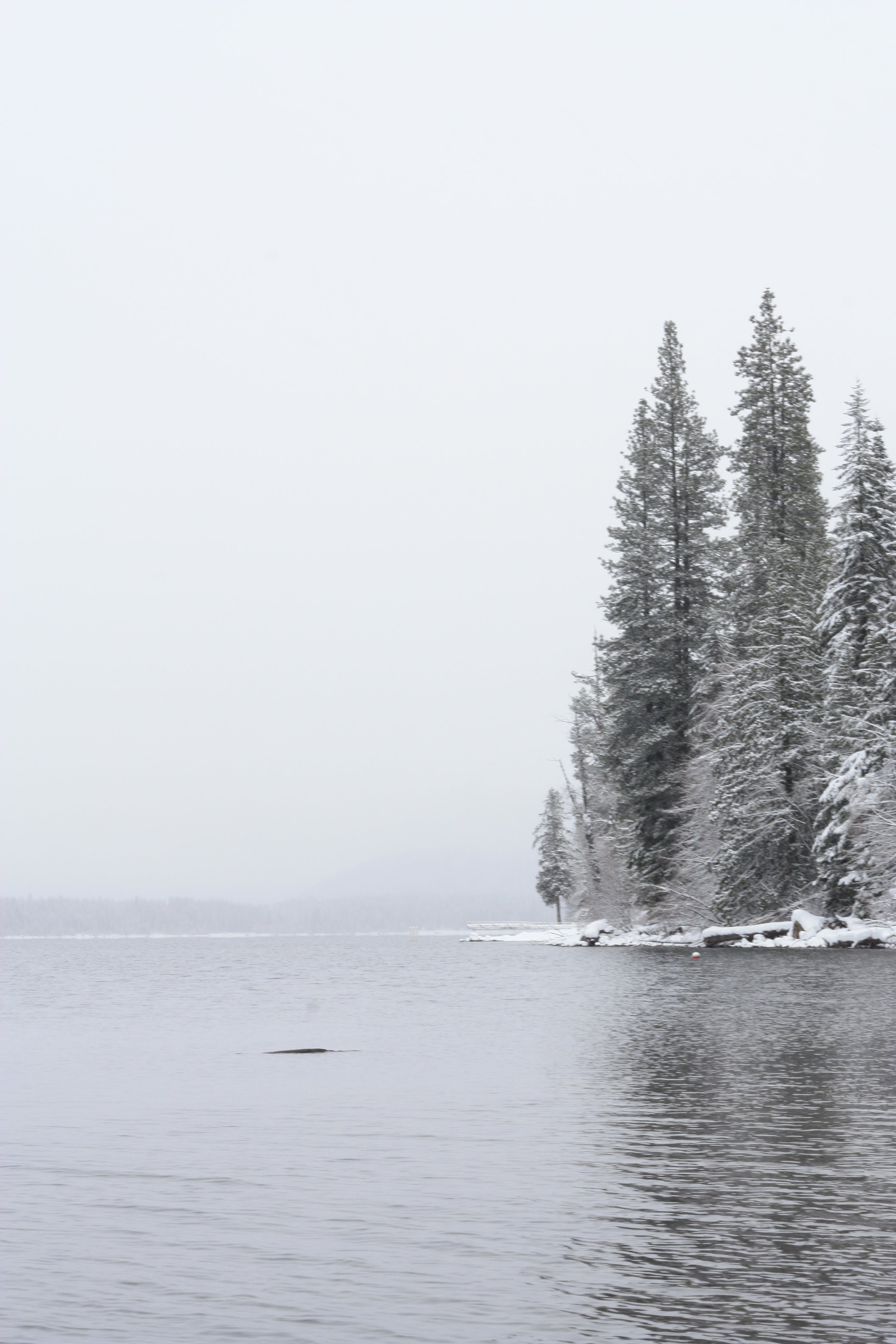Free stock photo of forest, lake, snow, Snowy forest