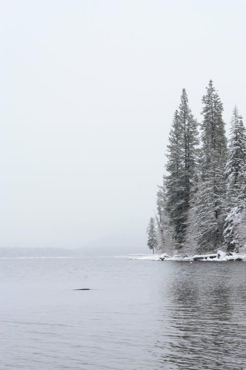 Gratis lagerfoto af skov, sne, snedækkede træer, snedækket skov