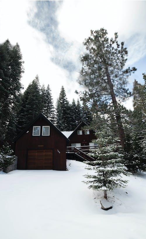ağaçlar, ahşap, bulutlar, buz içeren Ücretsiz stok fotoğraf