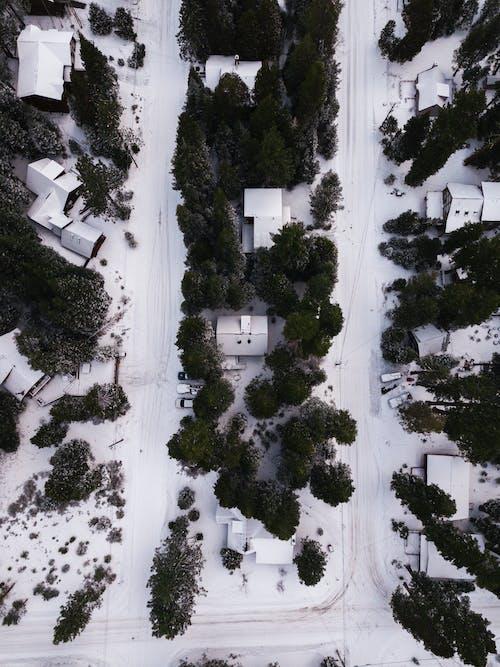 ağaçlar, arabalar, çevre, evler içeren Ücretsiz stok fotoğraf