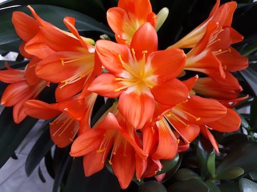 Photos gratuites de plante à fleurs