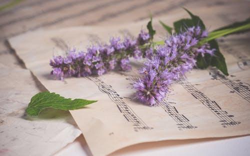 Fotos de stock gratuitas de al aire libre, antiguo, aromaterapia