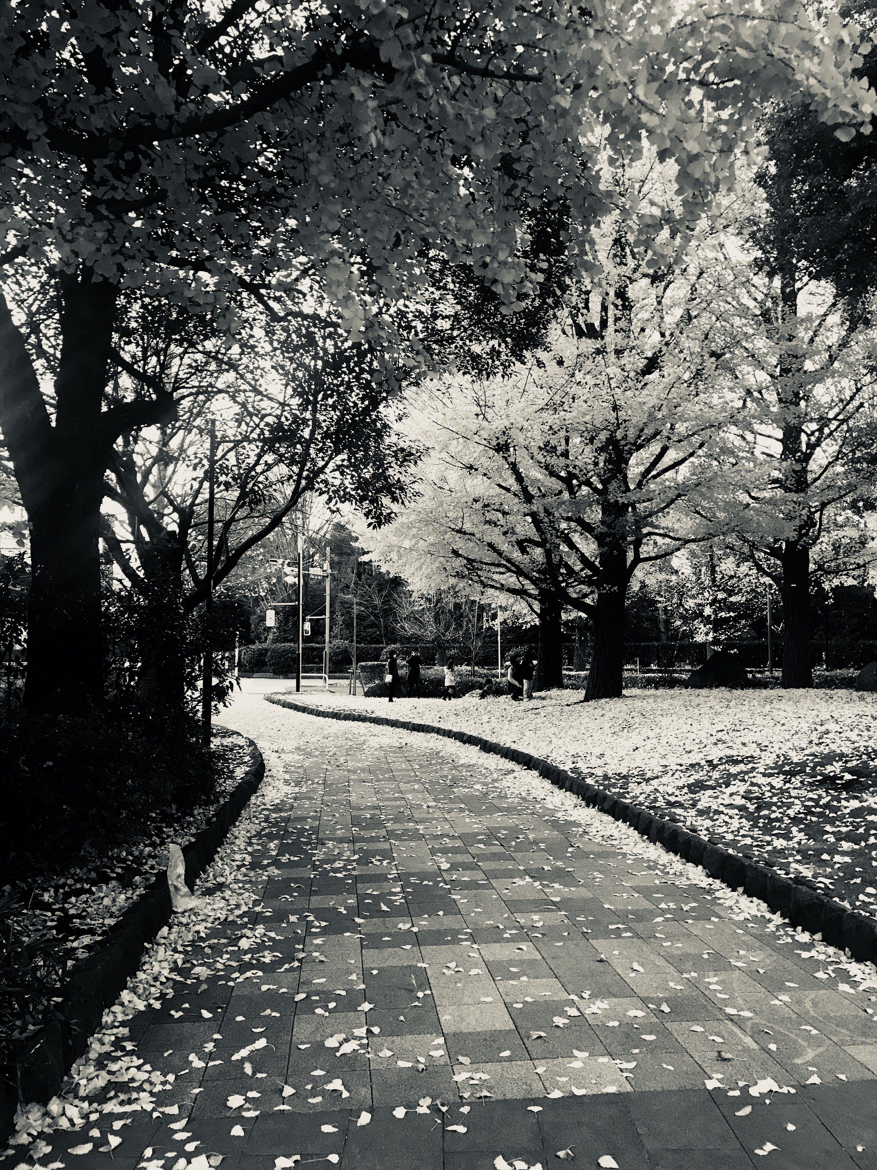ağaçlar, bitki örtüsü, çevre, doğa içeren Ücretsiz stok fotoğraf