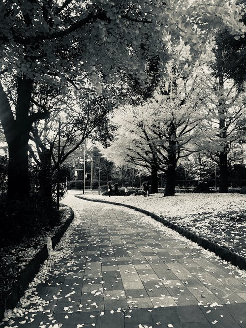 Darmowe zdjęcie z galerii z bruk, czarno-biały, droga, drzewa