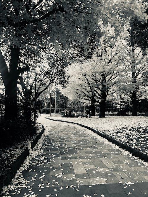Безкоштовне стокове фото на тему «вказівки, Вулиця, дерева, дорога»