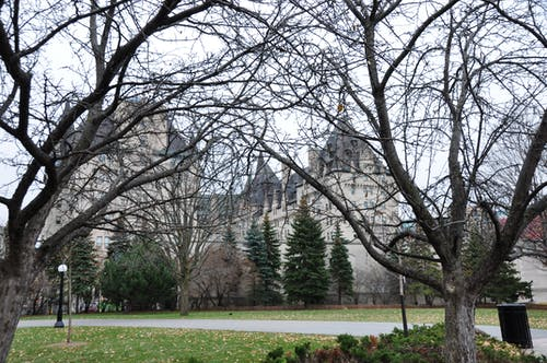 Free stock photo of branches, castle, Ottawa