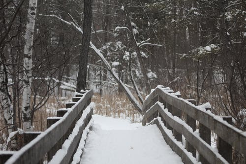 Free stock photo of bridge, snow, trees