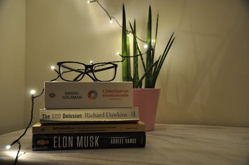 Free stock photo of books, houseplant, lights