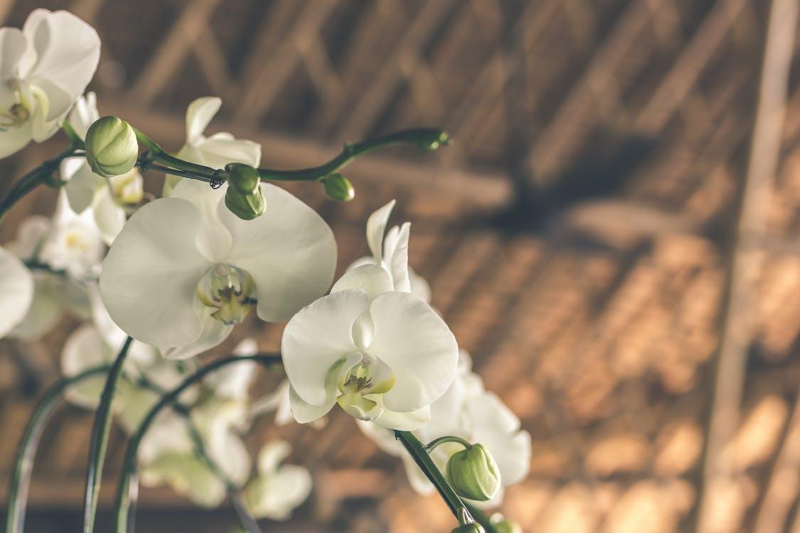 biela, botanický, čerstvý