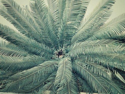 Gratis lagerfoto af bregneblad, flora, grøn, kø