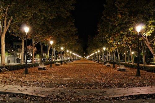 คลังภาพถ่ายฟรี ของ กลางคืน, ตะวันลับฟ้า, ต้นไม้, ถนน