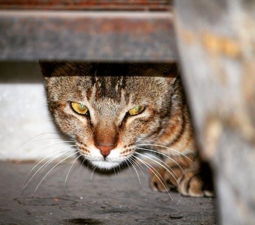 Foto stok gratis kucing