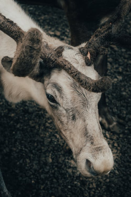 White and Brown Cow on Black Soil