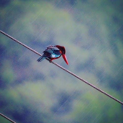Foto stok gratis alam, binatang, bulu, kabel