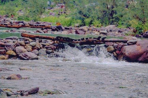 Foto stok gratis aliran sungai, berkemah, briges, tantangan luar ruangan