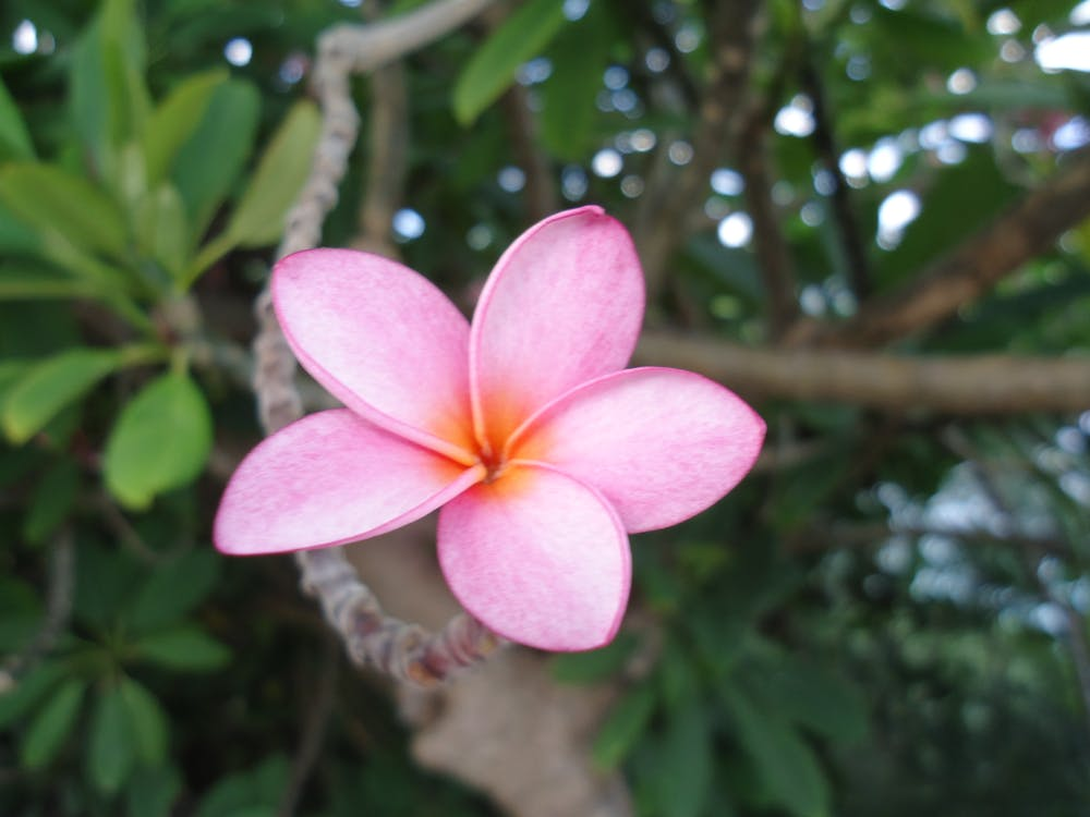 flowers, tropical