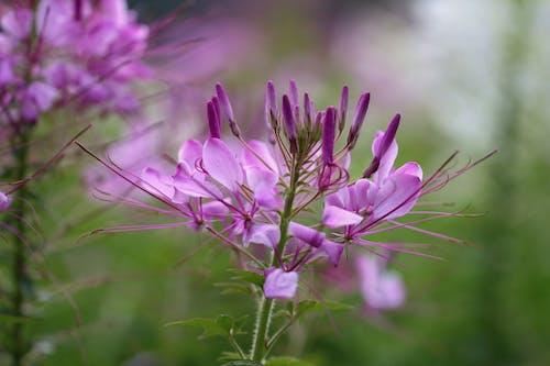Foto d'estoc gratuïta de flors, natura