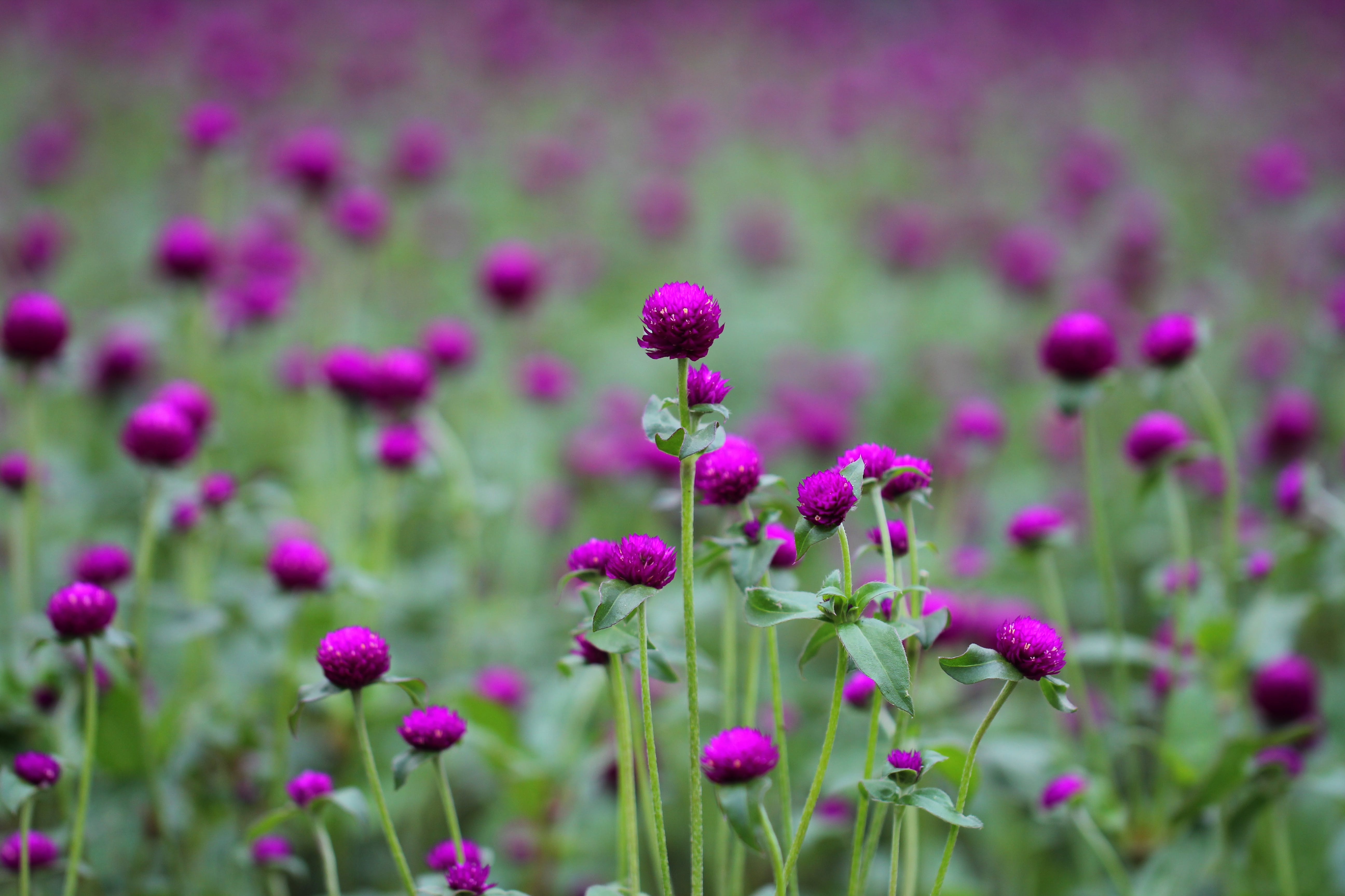 Photo of Purple and Green Flowers
