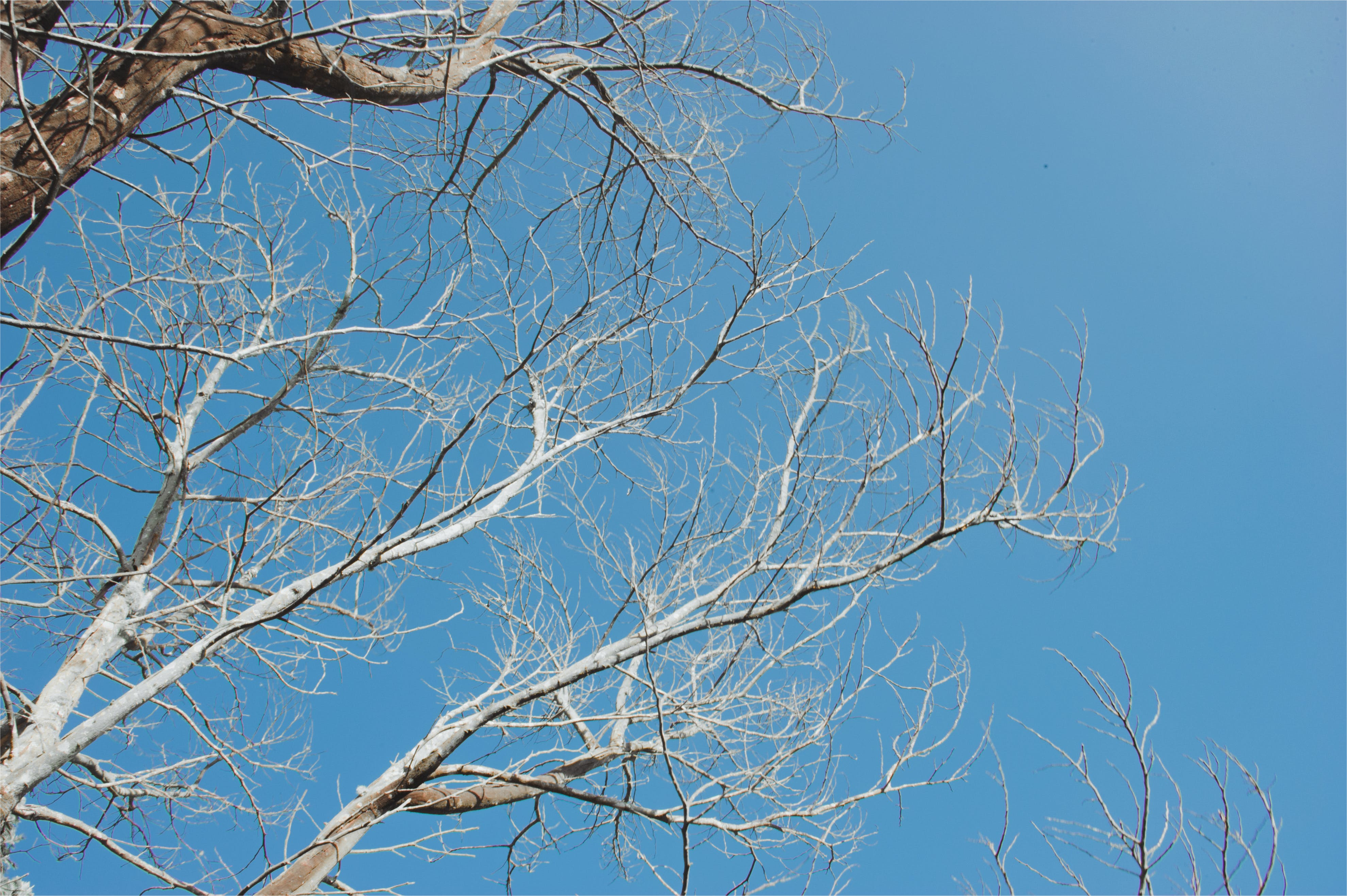 Bared Tree Under Blue Sky