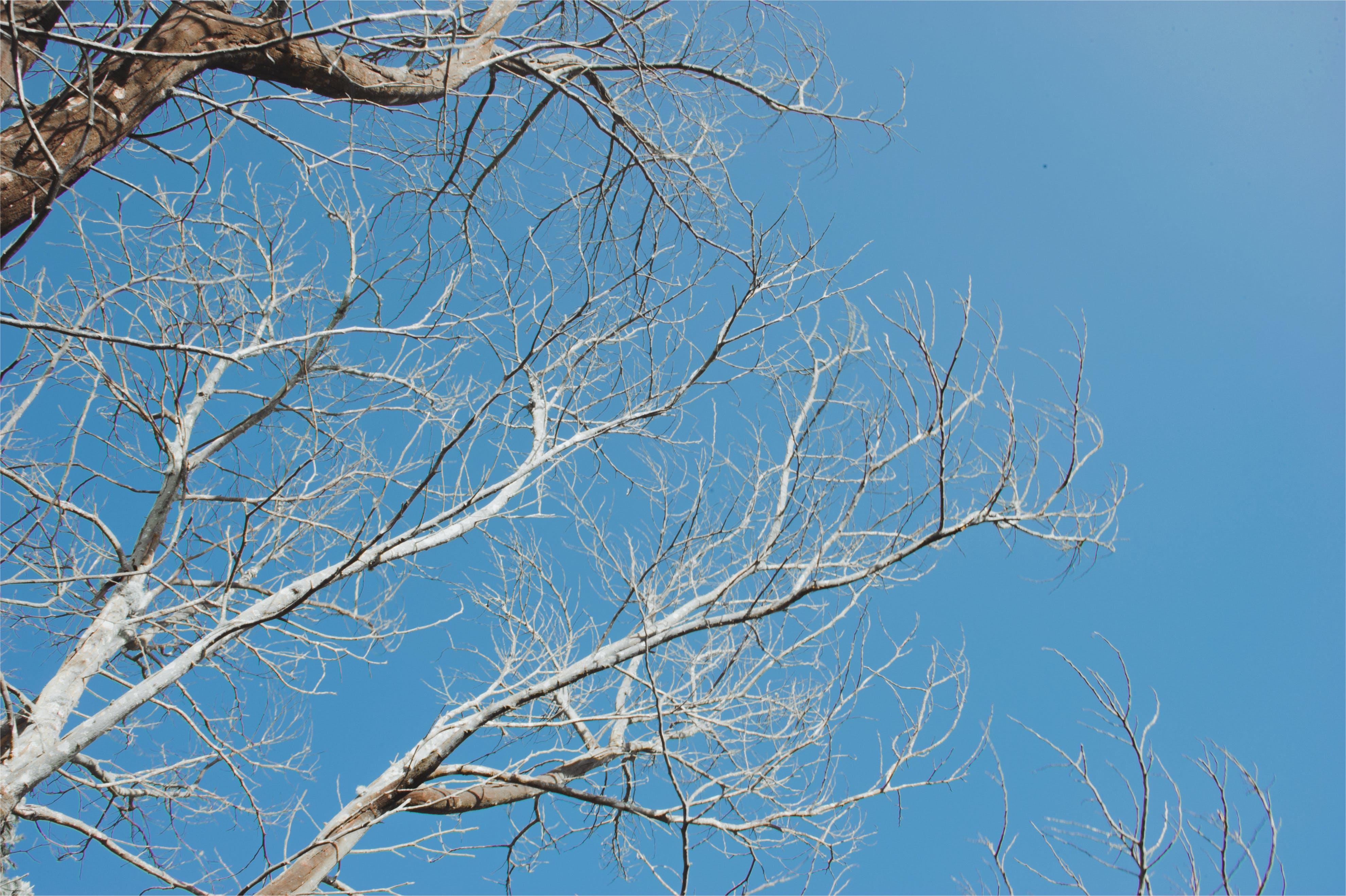 Bared Tree Under Blue Sky