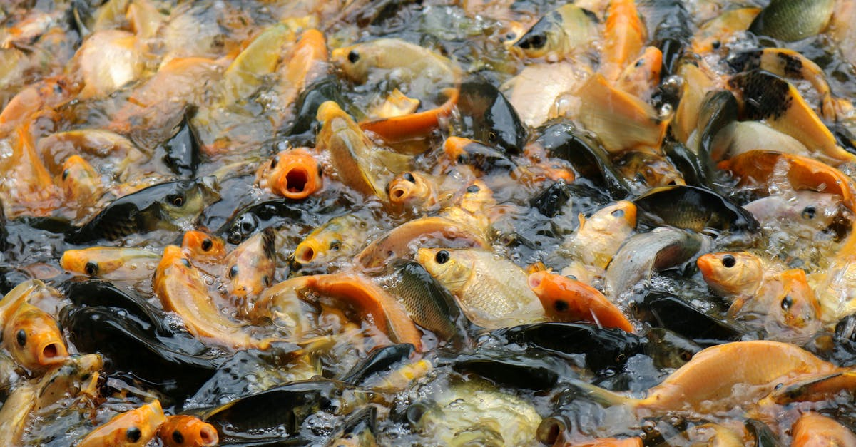пост прудовые рыбы фото и названия черноземья оборудованы скоростными лифтами